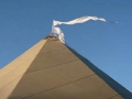 flags on the tipi top